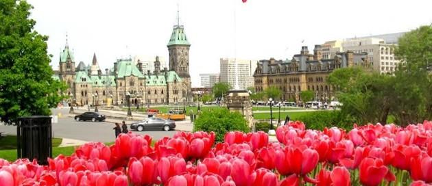tulips-parliament